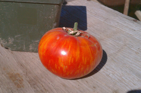 Sonoran Flair Tomato